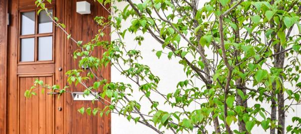 お出迎えは木の扉とシンボルツリーで